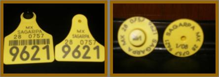 9c78ce8a1a76 SINIIGA. Sistema Nacional de Identificación Individual de Ganado
